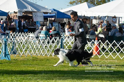 20200201_Sahuaro State Kennel Club_Border Collies_KDP_8513
