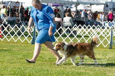 20200201_Sahuaro State Kennel Club_Border Collies_KDP_8416
