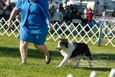 20200201_Sahuaro State Kennel Club_Border Collies_KDP_8516
