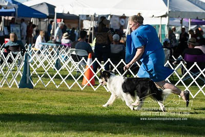 20200201_Sahuaro State Kennel Club_Border Collies_KDP_8522