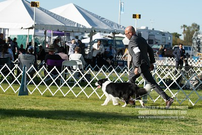 20200201_Sahuaro State Kennel Club_Border Collies_KDP_8469