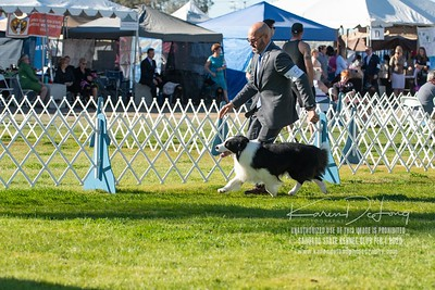 20200201_Sahuaro State Kennel Club_Border Collies_KDP_8453