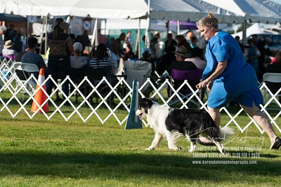 20200201_Sahuaro State Kennel Club_Border Collies_KDP_8518