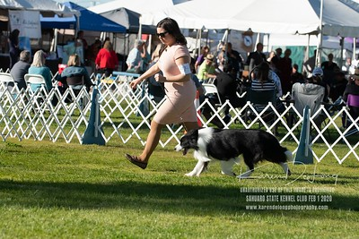 20200201_Sahuaro State Kennel Club_Border Collies_KDP_8499