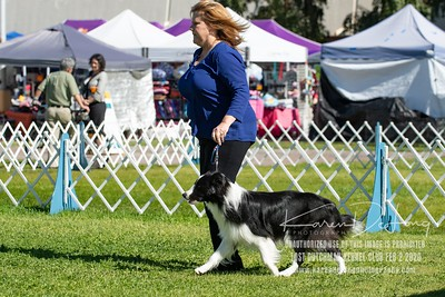20200202_Lost Dutchman Kennel Club_Border Collies_KDP_9579-Edit