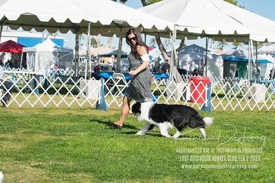 20200202_Lost Dutchman Kennel Club_Border Collies_KDP_9736