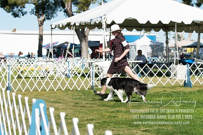 20200202_Lost Dutchman Kennel Club_Border Collies_KDP_9761