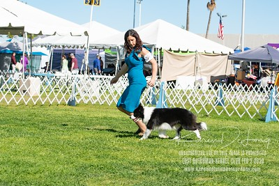 20200202_Lost Dutchman Kennel Club_Border Collies_KDP_9778