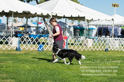 20200202_Lost Dutchman Kennel Club_Border Collies_KDP_9743