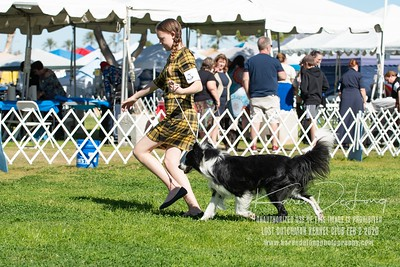 20200202_Lost Dutchman Kennel Club_Border Collies_KDP_9617