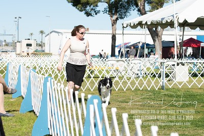20200202_Lost Dutchman Kennel Club_Border Collies_KDP_9713