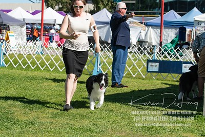 20200202_Lost Dutchman Kennel Club_Border Collies_KDP_9802
