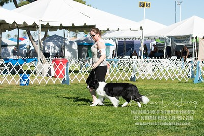 20200202_Lost Dutchman Kennel Club_Border Collies_KDP_9796