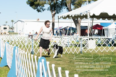 20200202_Lost Dutchman Kennel Club_Border Collies_KDP_9708