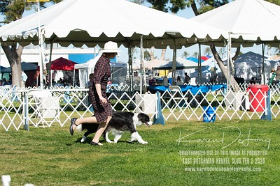 20200202_Lost Dutchman Kennel Club_Border Collies_KDP_9764