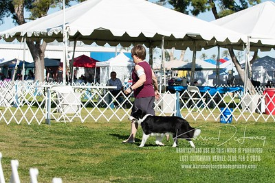 20200202_Lost Dutchman Kennel Club_Border Collies_KDP_9750