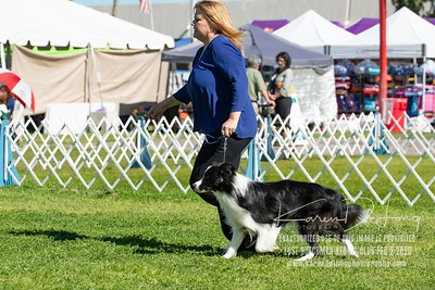 20200202_Lost Dutchman Kennel Club_Border Collies_KDP_9583