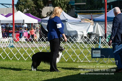 20200202_Lost Dutchman Kennel Club_Border Collies_KDP_9612