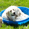200530 Dogs Bday-4