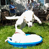 200530 Dogs Bday-6