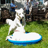 200530 Dogs Bday-5