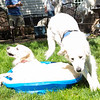 200530 Dogs Bday-7