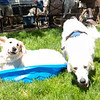 200530 Dogs Bday-8