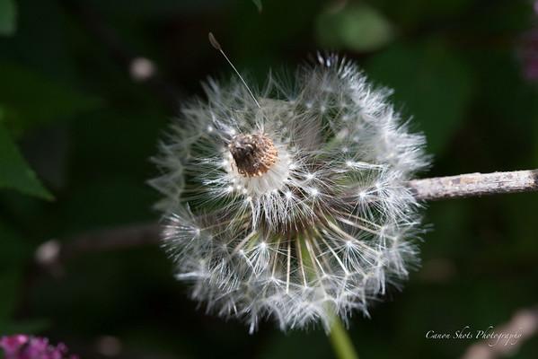 Beauty in my Yard (13 of 159)