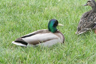 20060520-Animals 2006-05-2012-06-58