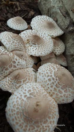 Mushroom Family 0913 (7 of 7)