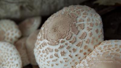 Mushroom Family 0913 (6 of 7)