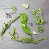 Fresh Herbs 01