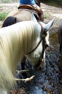 Horseback Riding in Bourbon--26