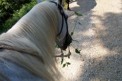 Horseback Riding in Bourbon--22
