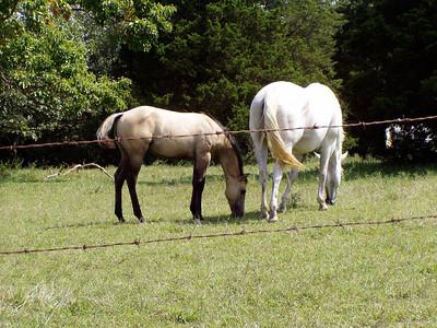 Horseback Riding in Bourbon--21