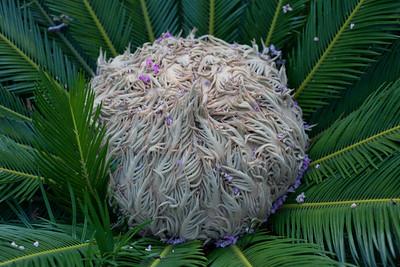 Palm Plant Kemah Texas-5671