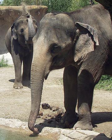20050813-elephants