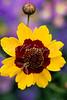 Garden flower Flr275