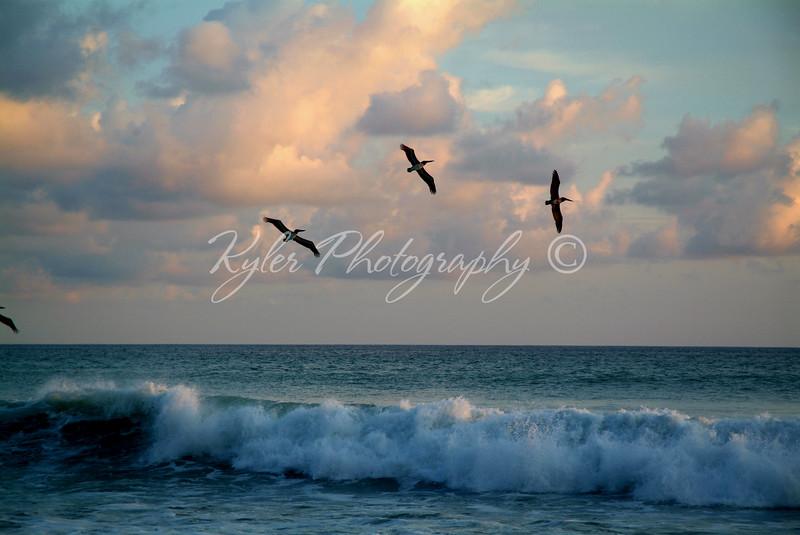 Pelican surf0728