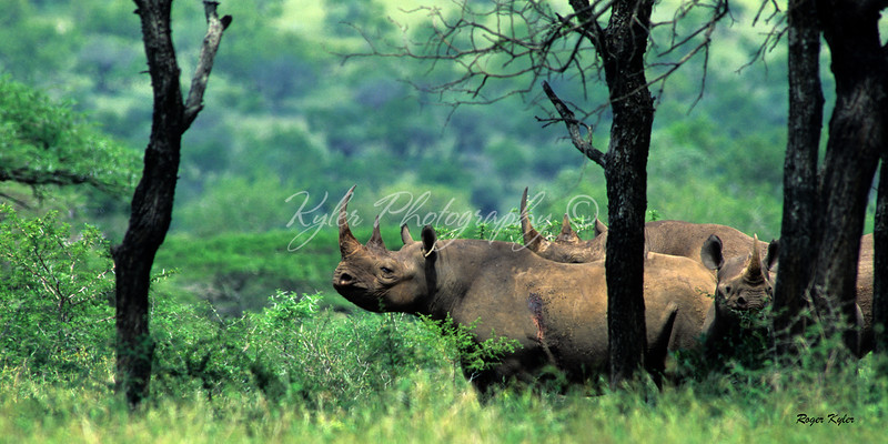 Black Rhino mkuzi-signed