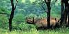 Black Rhino mkuzi-signed