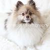 Gryffin+Poiley_382-3144555730-O