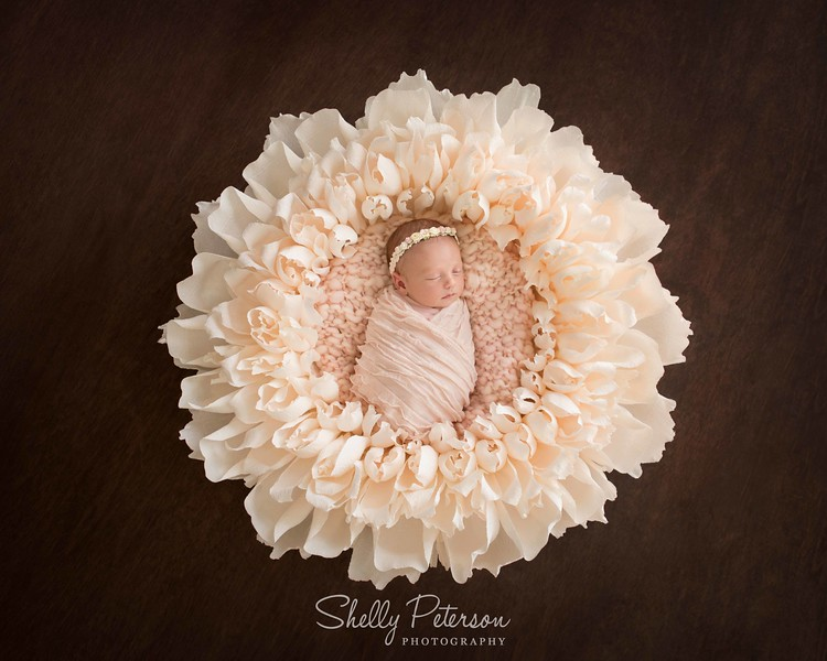 Giant Peony Flower Bowl on Plain Wood Floor - Pink Color Palette