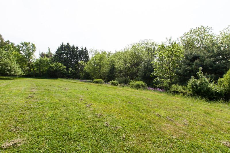 Tree line on southwest edge of yard