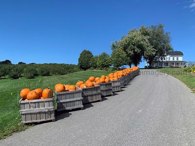 Ferjulian's Farm