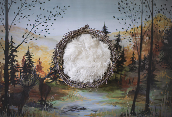 Autumnwoodsdigitalbackdrop