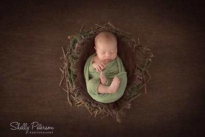 Nest on Plain Wood