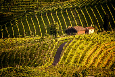 Prosecco region, view of hills with vineyards, sunset