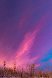Pink sunset over aspen forest