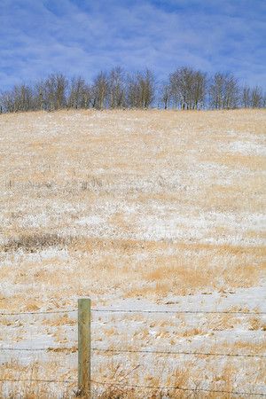 Fence, grassy slopes and aspen grow
